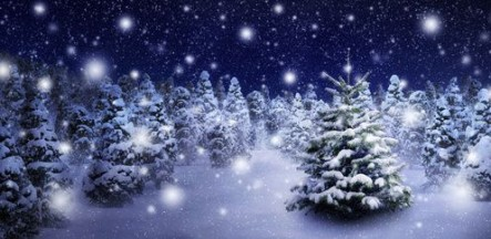 Tannenbaum in stimmungsvoller Schneelandschaft