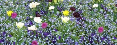 Wiese mit bunten Blumen im Frhling